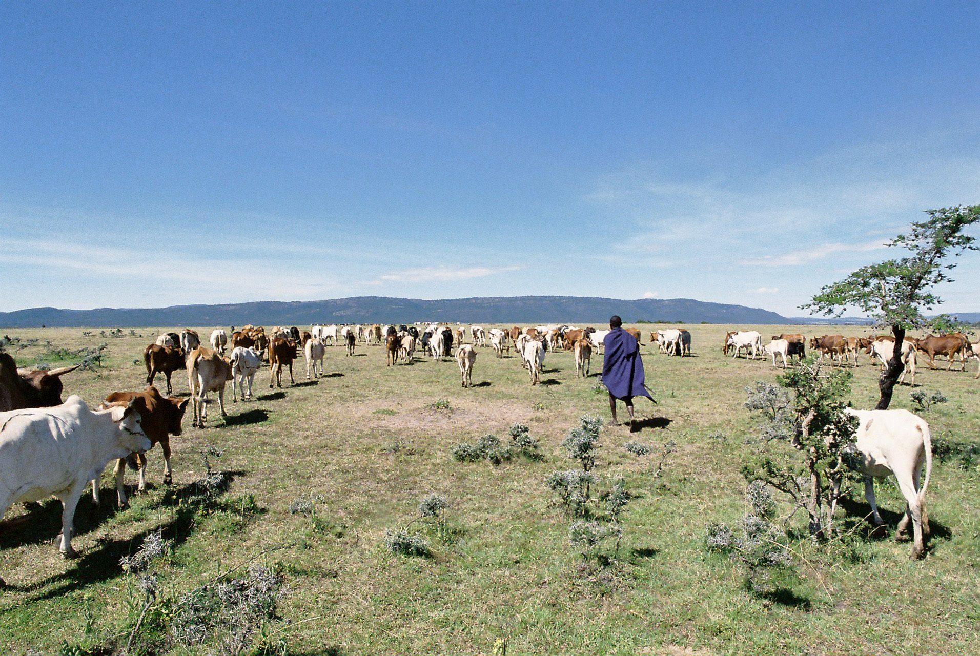 15-last-shepherds-jasper-groen